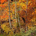 Seasons Change by naturesangle