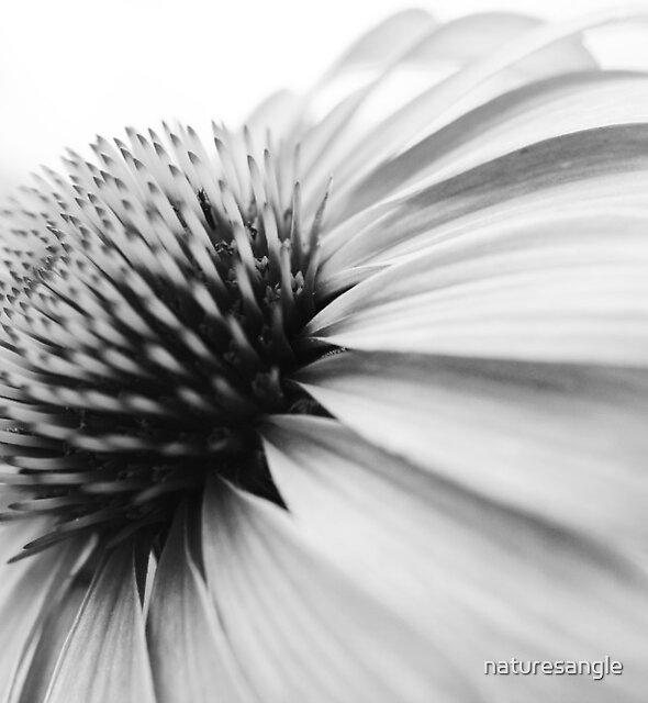 Daisy by naturesangle