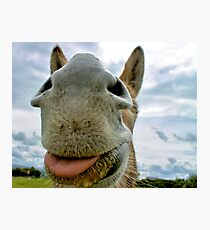 Donkey Humour Photographic Print
