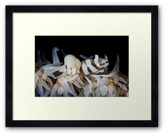 Zanzibar Shrimp & Isopod by MattTworkowski