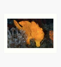 Yellow Painted Frogfish Art Print