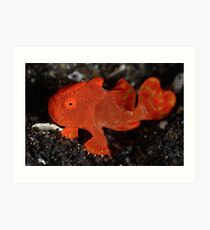 Juvenile Painted Frogfish Art Print