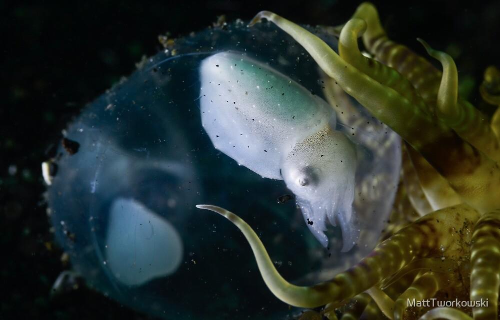 Baby Cuttle In Egg by MattTworkowski
