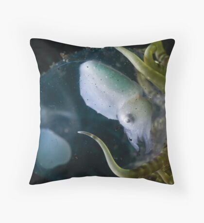 Baby Cuttle In Egg Throw Pillow