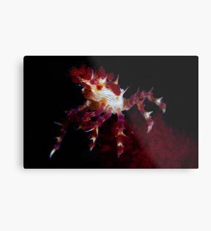 Candy Crab Metal Print