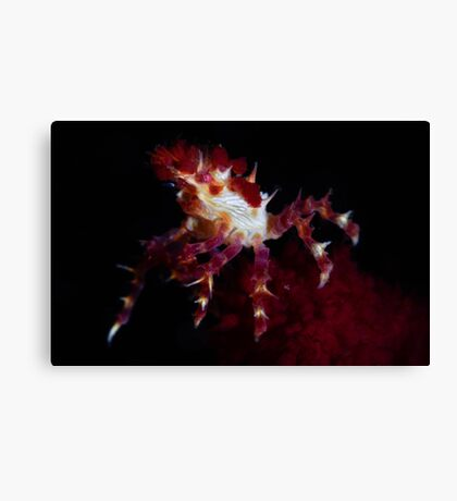 Candy Crab Canvas Print
