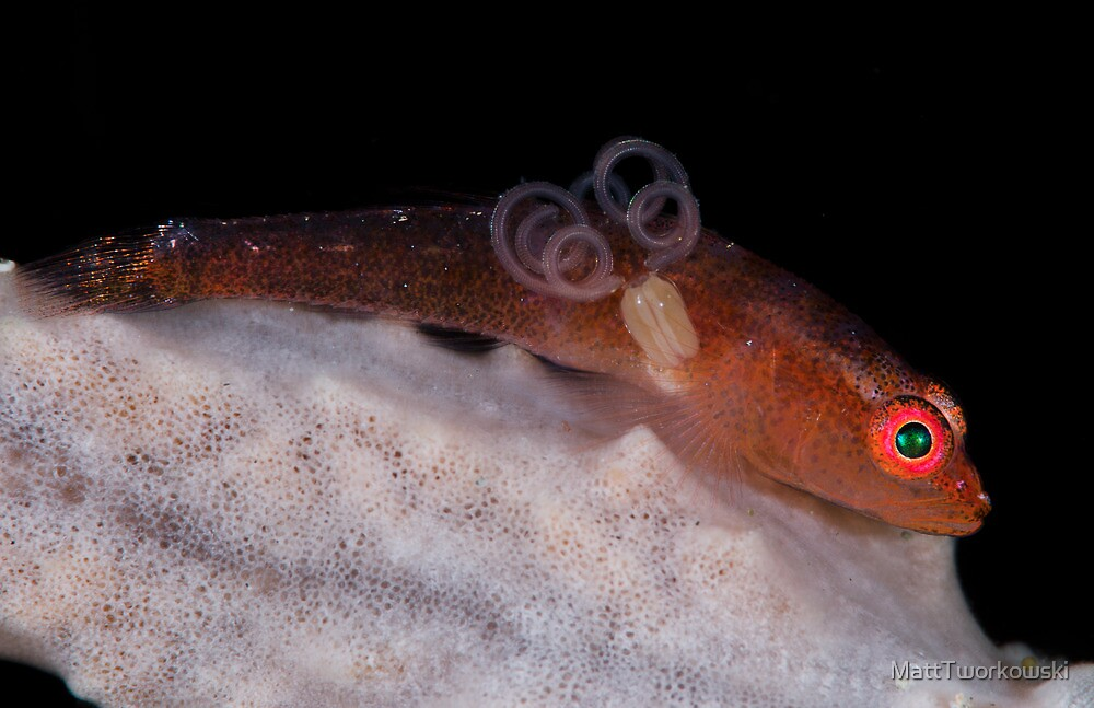 Goby With Parasite by MattTworkowski