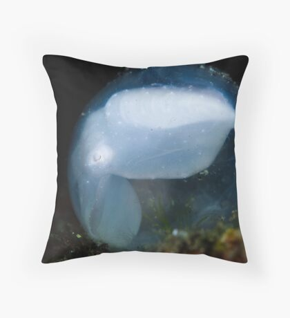 Cuttlefish In Egg Throw Pillow