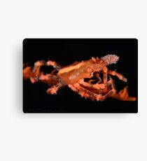 Orange Xeno Crab Canvas Print