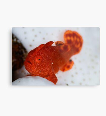 Painted Frogfish Metal Print