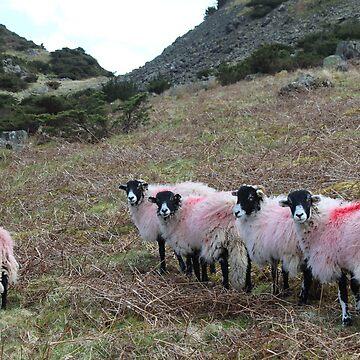 Them Sheep by NebTheThird