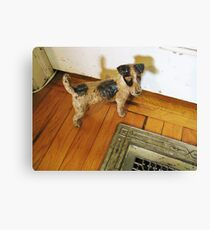 A Registered Door Dog Canvas Print