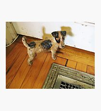 A Registered Door Dog Photographic Print