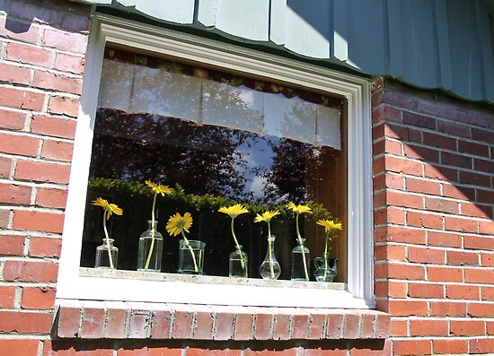 University Place Garden Tour - Home #1 Dancing Gerbera Daisies on a Sill by seeingred13