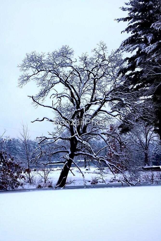 Frozen Tree by BonzaiiPhoto