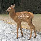 Precious Little Elk Fawn by Ginny York