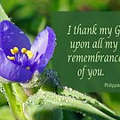 Thankful for You ~ Philippians 1:3 by Robin Clifton
