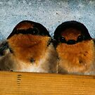 House Swallows by adbetron