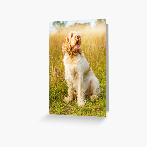 Wildflower meadow Spinone Greeting Card