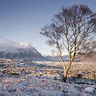 Glen Coe Tree by Brian Kerr
