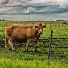Alberta Beef by Keri Harrish