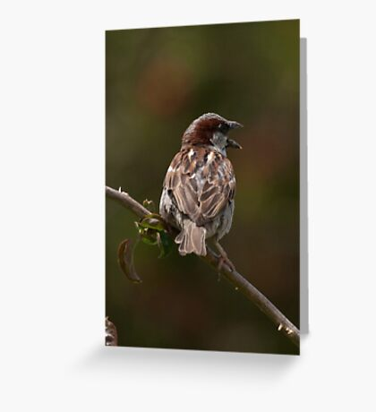 Sparrow: Portugal  Greeting Card