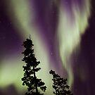 Aurora Borealis by Marty Samis