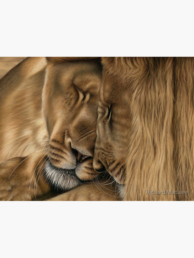 Wildlife Artwork of two lions by richardmacwee