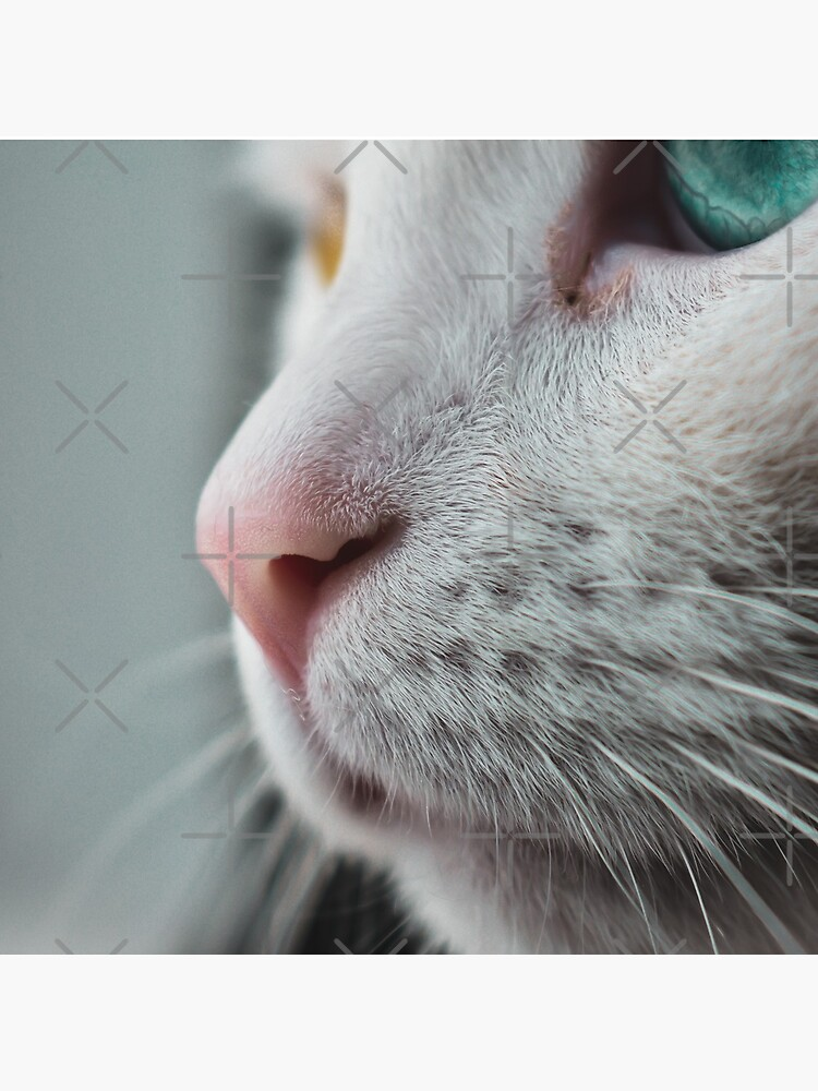 Cat nose closeup by didssph
