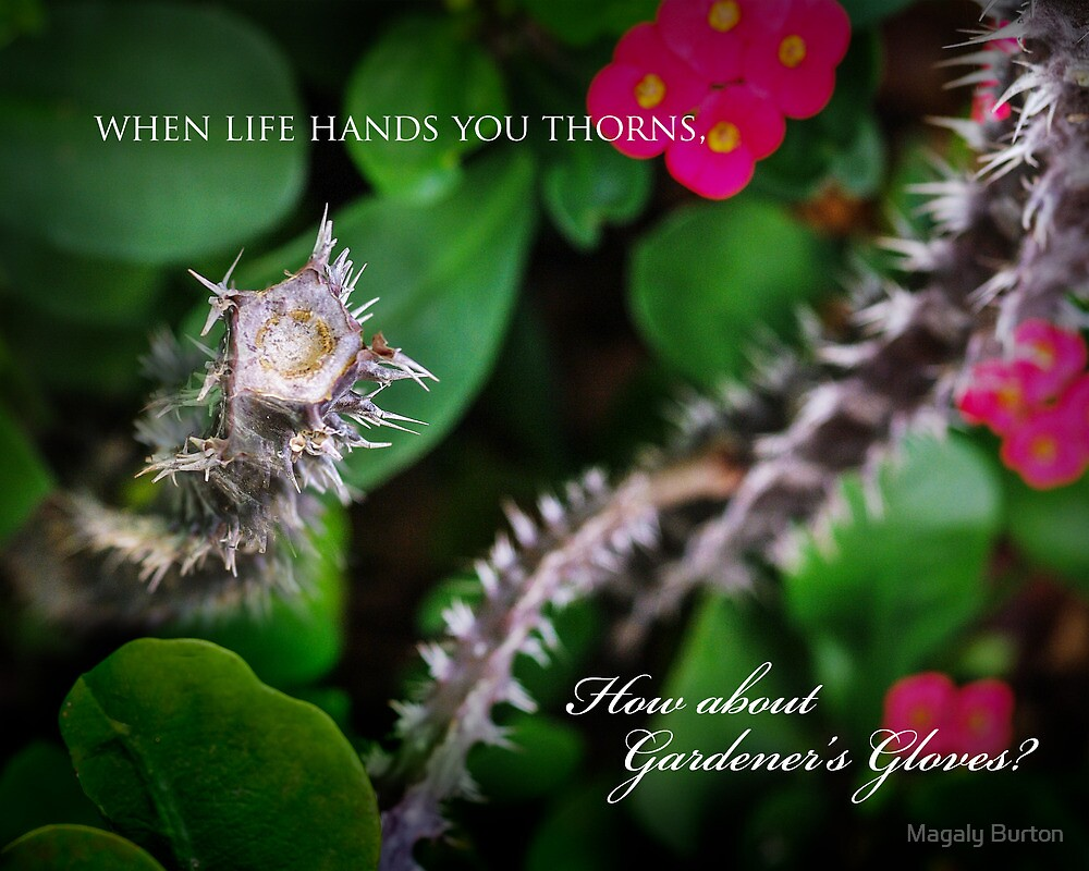 When life hands you thorns ... by Magaly Burton