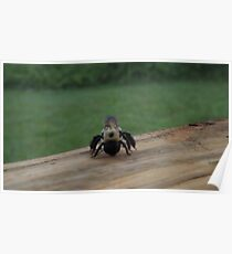 sleeping bumble bee Poster