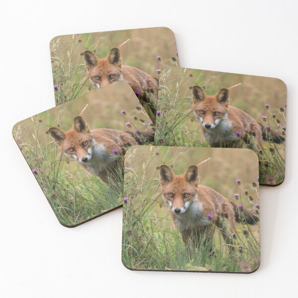 Red Fox amongst flowers Coasters (Set of 4)
