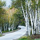 The Shelburne Birches by Harry H Hicklin