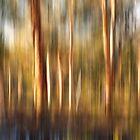 Spirited Gum Trees by Peter Evans