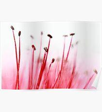 Flower arranging. Poster