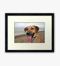 Happy Dog on the Beach Framed Print