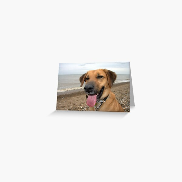 Happy Dog on the Beach Greeting Card