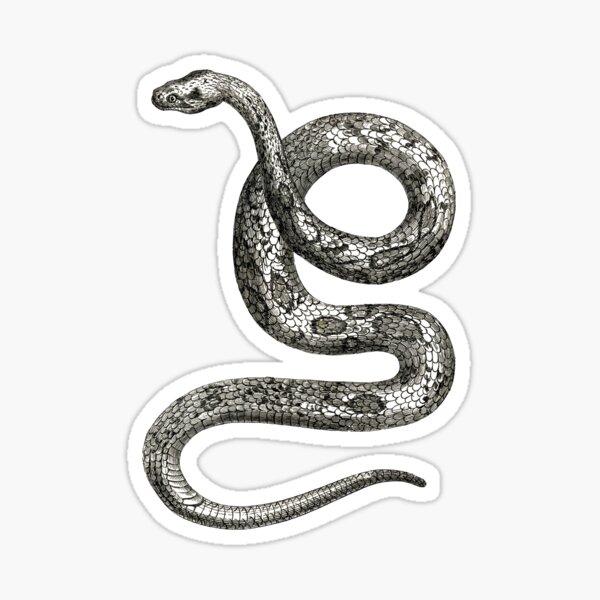 Vintage Snake Illustration Sticker