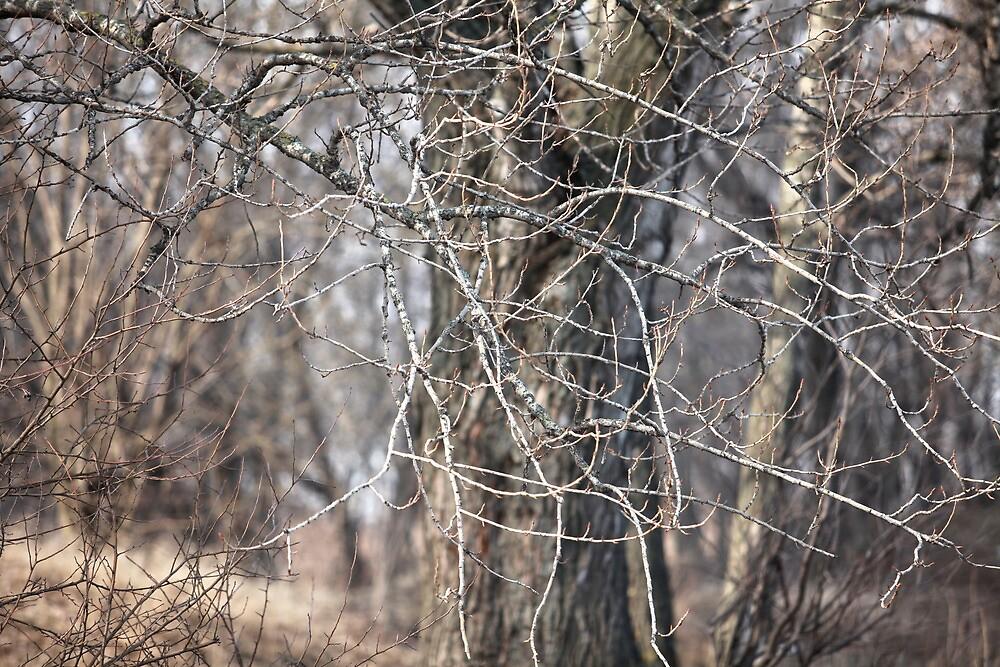 Tree by mrivserg