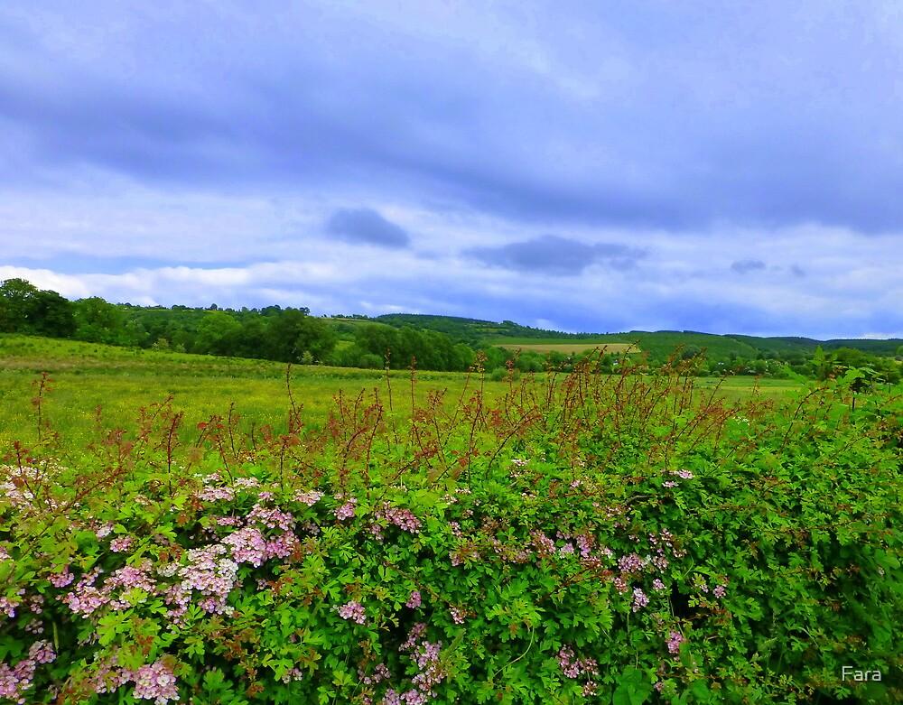 Fermanagh Countryside by Fara