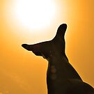 Reaching For The Sun by Bill Colman