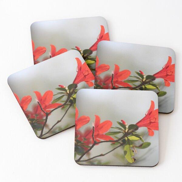 Fiery Bright Red Azalea Flower Blossom Coasters (Set of 4)