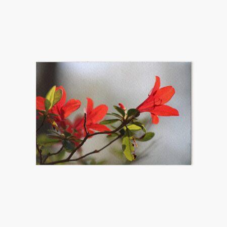 Fiery Bright Red Azalea Flower Blossom Art Board Print