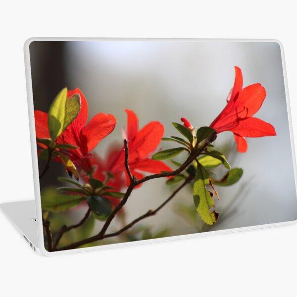 Fiery Bright Red Azalea Flower Blossom Laptop Skin