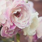 Roses by Angela Stewart