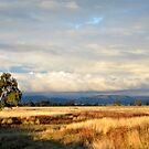 View from Stoney Creek Road, Narrabri by Elizabeth McPhee