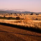 View from east of Bellata by Elizabeth McPhee