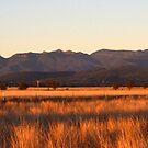 View of Nandewaa Range from Maules Creek Road, Narrabri by Elizabeth McPhee