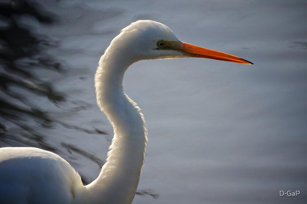 Egret  by D-GaP