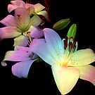1691-multicolor lilys by elvira1